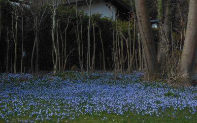 Frühling vor Ort