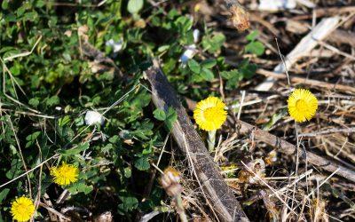 Patenschaft für ein Stück Blühwiese
