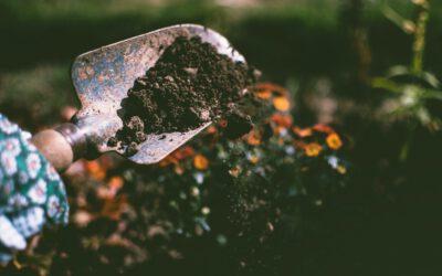Kompostieren im eigenen Garten